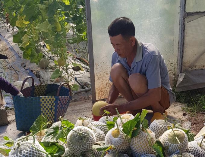 Quả ngọt từ nông nghiệp công nghệ cao