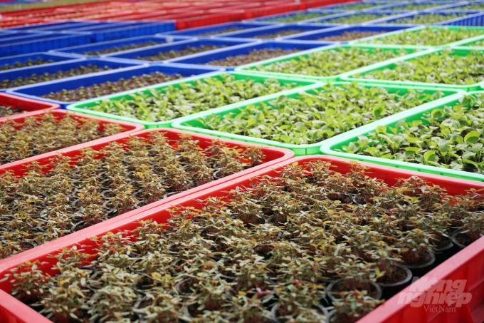 Nơi trồng rau thủy canh lớn nhất Sài Gòn